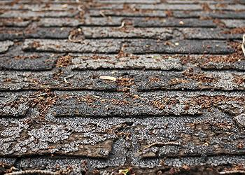 invest in a new roof - Ashe and Winkler Restoration